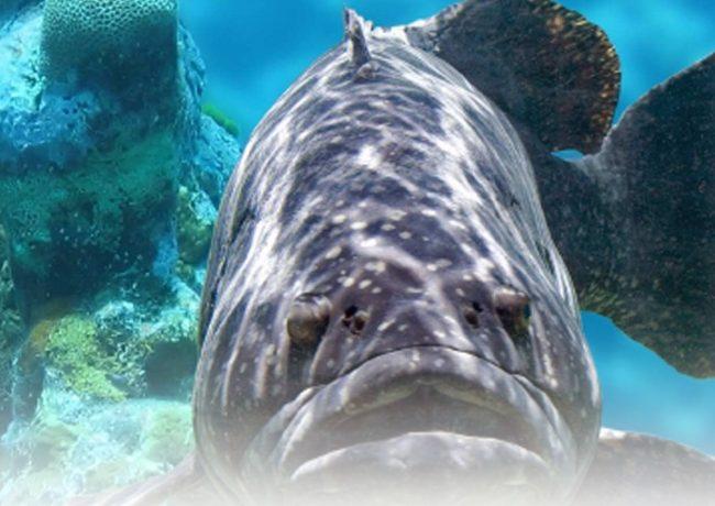 Snorkeling dans l'aire marine protégée de Bergeggi
