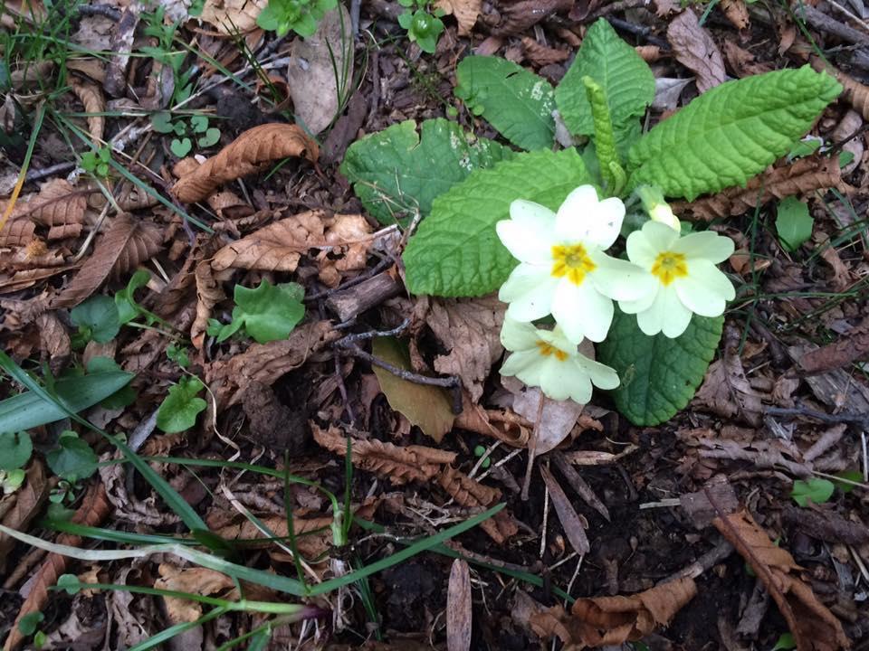 la flora in valle ibà