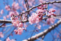 Pasqua e Ponti di primavera 2019: scopri cosa fare in Liguria