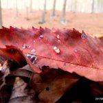 foliage-autunno-liguria