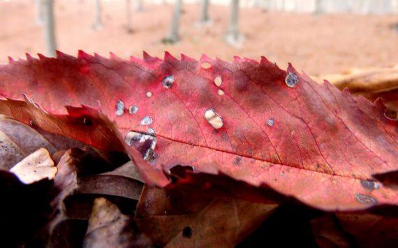 Colori e sapori dell'autunno in Liguria