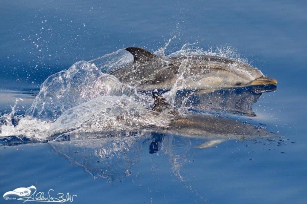 pesce che nuota nel mare a ceriale