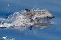 Il respiro del mare: un incontro ravvicinato con i cetacei della Liguria